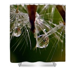 Dandelion Droplets Shower Curtain
