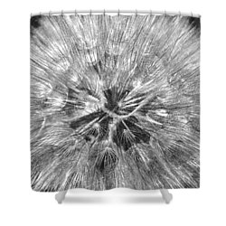 Dandelion Fireworks In Black And White Shower Curtain by Rona Black
