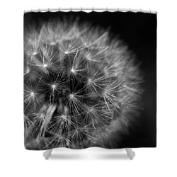 Shower Curtain featuring the photograph Dandelion Fluff by Rebecca Davis