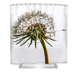 Dandelion Shower Curtain by Hannes Cmarits