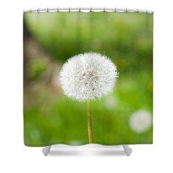 Dandelion Puffball Shower Curtain