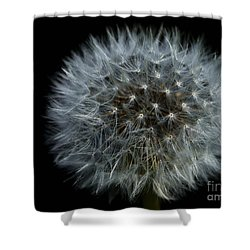 Dandelion Seed Head On Black Shower Curtain by Sharon Talson