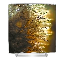 Dandelion Shine Shower Curtain by Peggy Collins