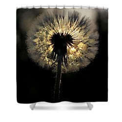 Dandelion Sunrise - 1 Shower Curtain