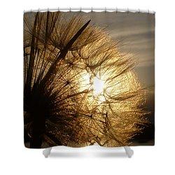 Dandelion Sunset Shower Curtain