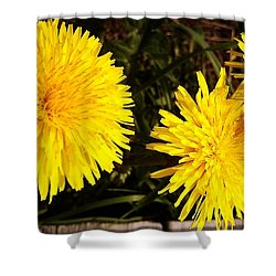 Shower Curtain featuring the photograph Dandelion Weeds? by Martin Howard