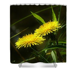 Shower Curtain featuring the photograph Dandelions by Sherman Perry