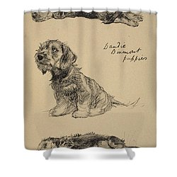 Dandie Dinmont Puppies, 1930 Shower Curtain by Cecil Charles Windsor Aldin