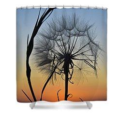 Dandy Lion Shower Curtain