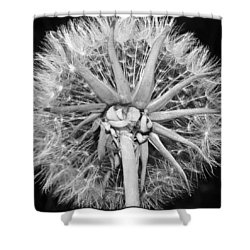 Dandy  Lion...looking Up Shower Curtain by Tammy Schneider