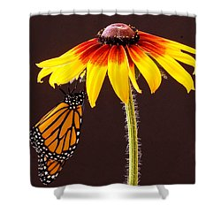 Dangling Monarch Shower Curtain by Jean Noren