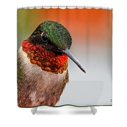 Da162 Hummingbird Thinking By Daniel Adams Shower Curtain