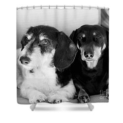 Dapper Doxies Shower Curtain