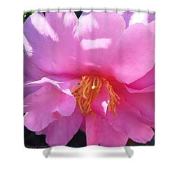 Dappled Sunlight On Pink Camellia Shower Curtain