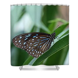 Dark Blue Tiger Butterfly #2 Shower Curtain by Judy Whitton