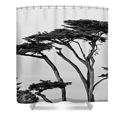Dark Cypress Shower Curtain by Melinda Ledsome