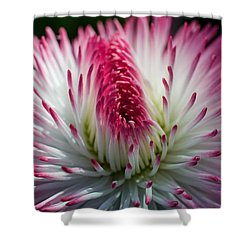 Dark Pink And White Spiky Petals Shower Curtain