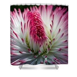 Dark Pink And White Spiky Petals Shower Curtain by Jordan Blackstone