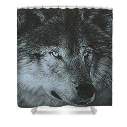 Dark Wolf Shower Curtain