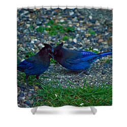 Darling I Have To Tell You A Secret-sweet Stellar Jay Couple Shower Curtain