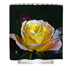 Shower Curtain featuring the photograph Day Breaker Rose by Kate Brown