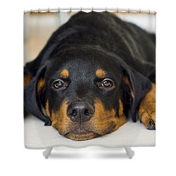 Day Dreaming Shower Curtain by Aged Pixel