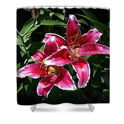Pretty Lilies Shower Curtain by Nick Kloepping