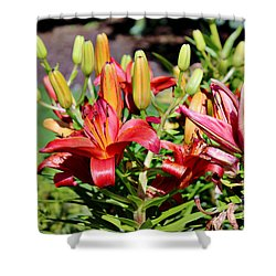 Day Lillies In The Garden Shower Curtain