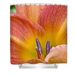 Day Lily  3 Shower Curtain