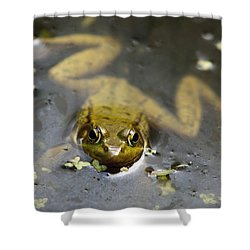 Daybreak Frog Shower Curtain by Christina Rollo