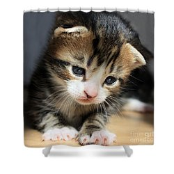 Daydreamer Kitten Shower Curtain