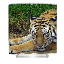 Daydreaming Shower Curtain by Sandi OReilly