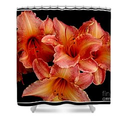 Shower Curtain featuring the photograph Daylilies 1 by Rose Santuci-Sofranko