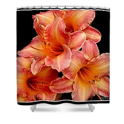 Shower Curtain featuring the photograph Daylilies 2 by Rose Santuci-Sofranko