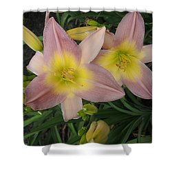 Daylilies Shower Curtain by Chrissey Dittus