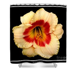 Shower Curtain featuring the photograph Daylily 3 by Rose Santuci-Sofranko