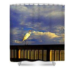 Daytona Beach Fl Bird Sun Glow Pier  Shower Curtain