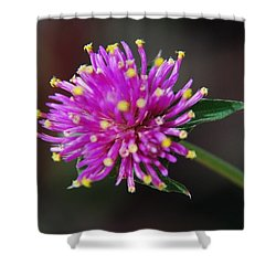 Shower Curtain featuring the photograph Dbg 050812-1779 by Tam Ryan
