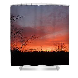 Dead Tree Sunrise Shower Curtain