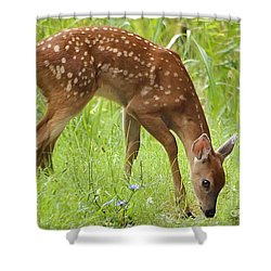 Shower Curtain featuring the photograph Little Fawn Blue Wildflowers by Nava Thompson
