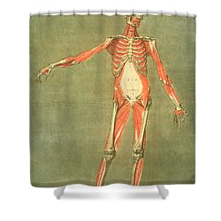 Deeper Muscular System Of The Front Shower Curtain by Arnauld Eloi Gautier D'Agoty