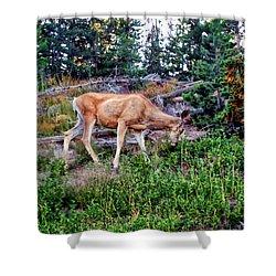 Shower Curtain featuring the photograph Deer 1 by Dawn Eshelman