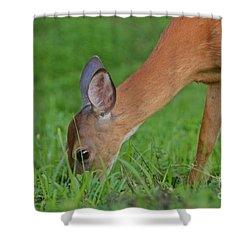 Deer 25 Shower Curtain