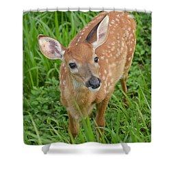 Deer 42 Shower Curtain