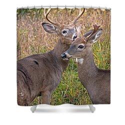 Deer 48 Shower Curtain
