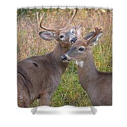 Deer 49 Shower Curtain
