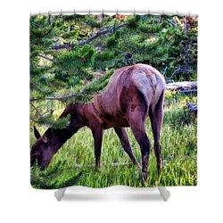 Shower Curtain featuring the photograph Deer 7 by Dawn Eshelman