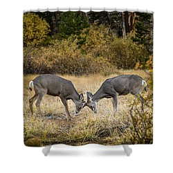 Deer Games Shower Curtain