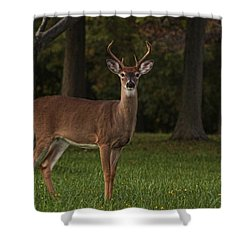 Shower Curtain featuring the photograph Deer In Headlight Look by Tammy Espino