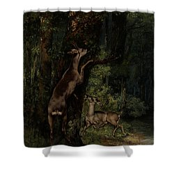 Deer In The Forest Shower Curtain by Gustave Courbet